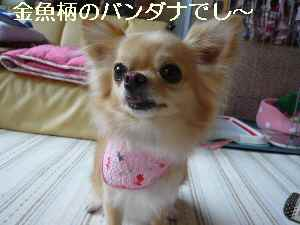 blog2009082002.jpg