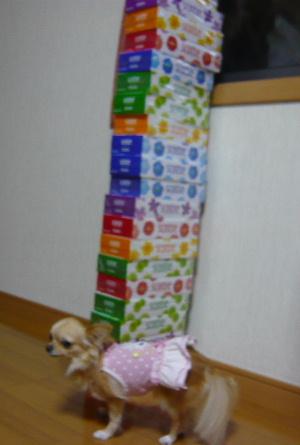 blog2009082201.jpg