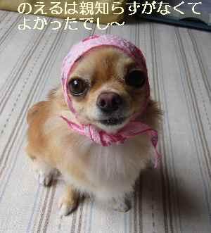 blog2009082501.jpg