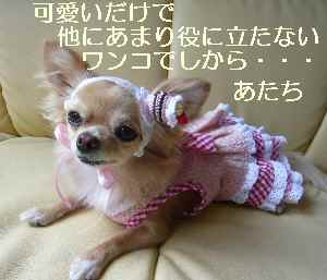 blog2009082604.jpg