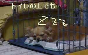 blog2009083102.jpg