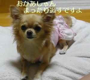 blog2009100501.jpg