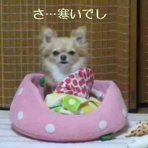 blog2009100603.jpg