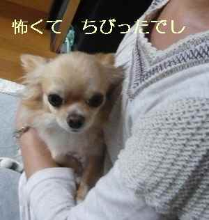 blog2009101007.jpg