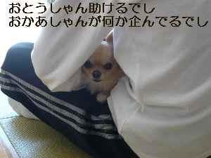 blog2009101201.jpg