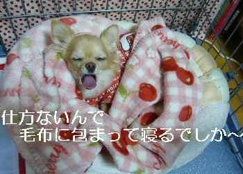 blog2010112901.jpg