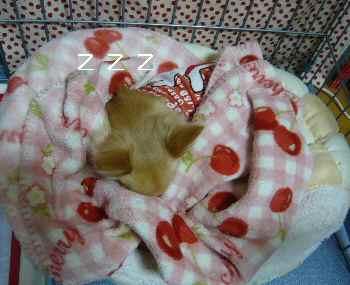 blog2010112902.jpg