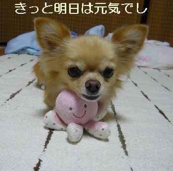 blog2011092901.jpg
