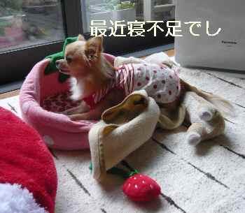 blog20111005501.jpg
