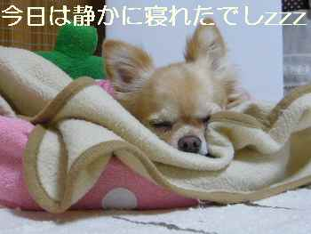 blog2011100603.jpg