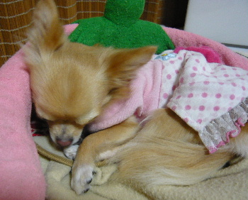 blog2011100805.jpg