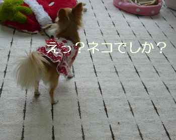 blog2011101103.jpg