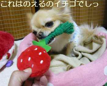 blog2011101204.jpg