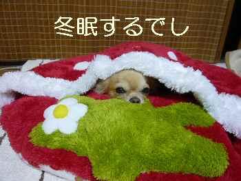 blog2011102602.jpg