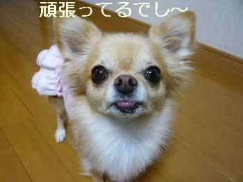 blog2011102902.jpg