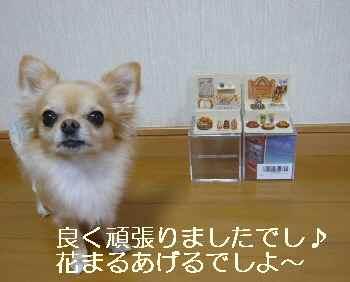 blog2011103001.jpg