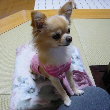 blog2011110102.jpg