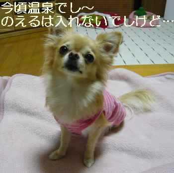 blog2011110301.jpg