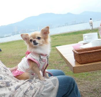 blog2011110405.jpg