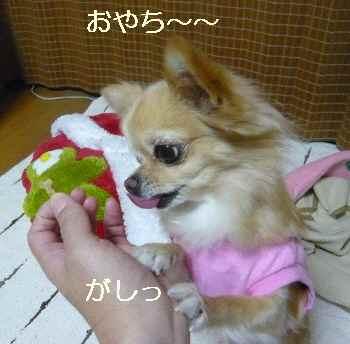blog2011110704.jpg