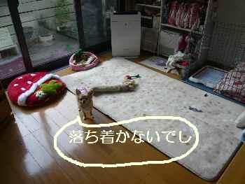 blog2011110901.jpg