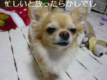 blog2011111001.jpg