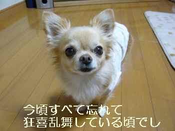 blog2011111202.jpg