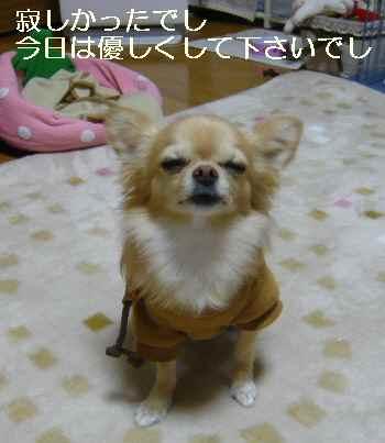 blog2011111405.jpg