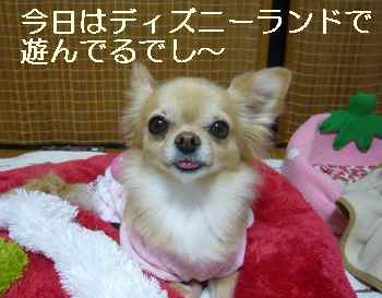 blog2011111801.jpg