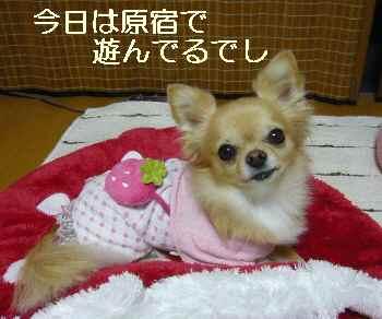 blog2011111901.jpg