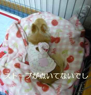 blog2011112903.jpg