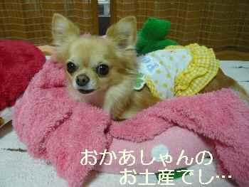 blog2011113001.jpg