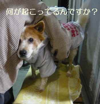 blog2011120402.jpg