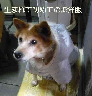 blog2011120404.jpg