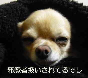 blog2011120501.jpg