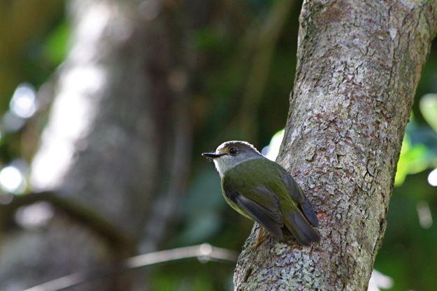 2406木幹小鳥