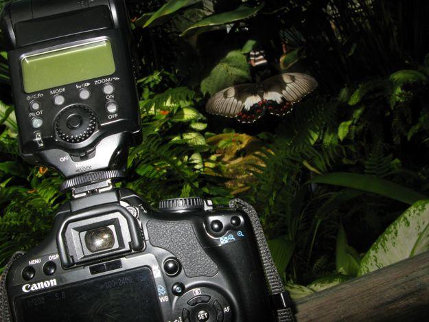 2506蝶館カメラ