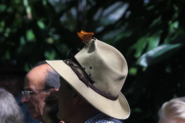 2506帽子蝶