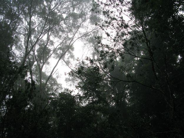 2606カソワリハウス朝樹木