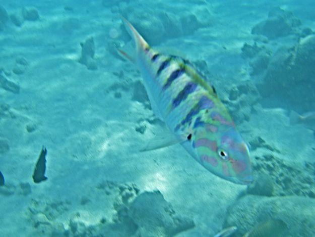 2706カラフル魚