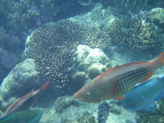 2706カラフル魚2