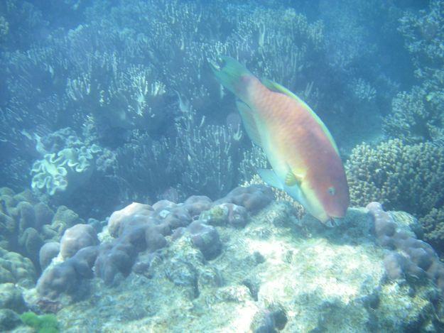 2706カラフル魚3