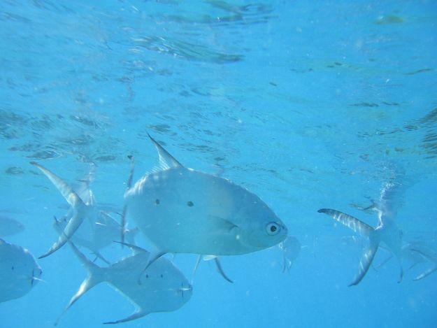 2706目前魚2