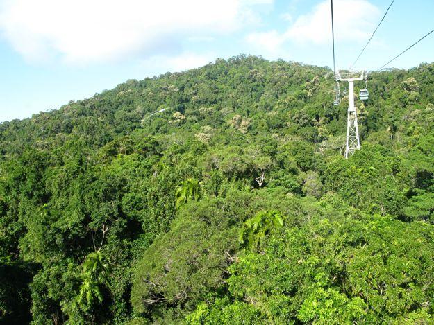 2806スカイレール熱帯雨林樹冠
