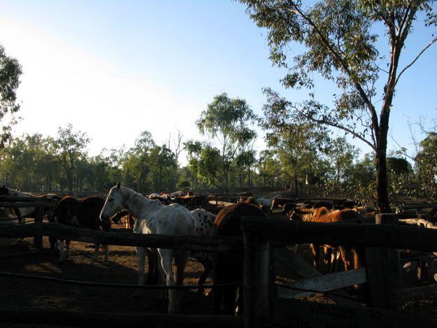 0807馬牧場