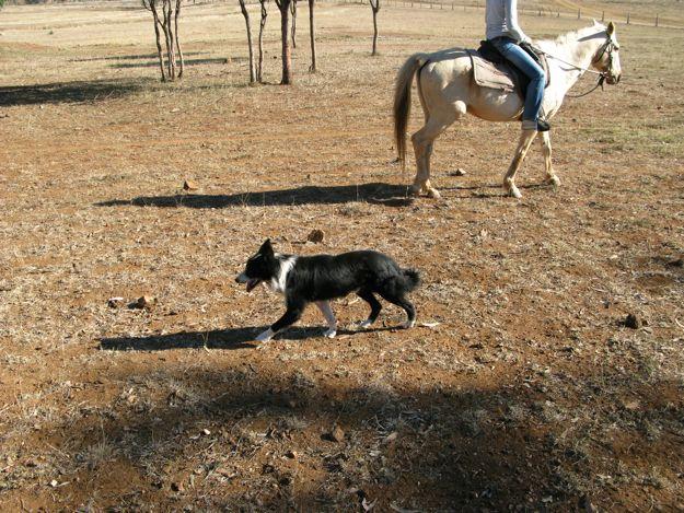 0807馬牧羊犬