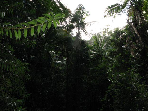 1007雨林