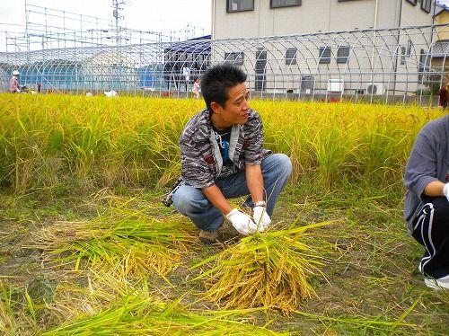 s-稲刈り7