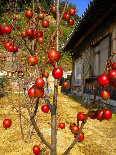 s-秋の庭3