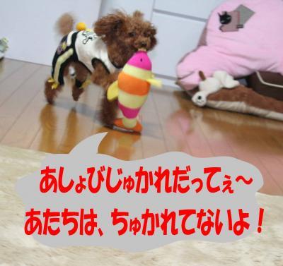 092903_convert_20090929233309.jpg